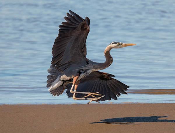 Photograph - Beach Landing by Loree Johnson
