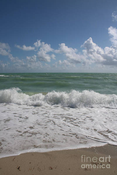 Photograph - Beach Life by Carol Groenen