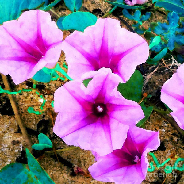 Convolvulaceae Wall Art - Mixed Media - Beach Morning Glory by Stacey Chiew