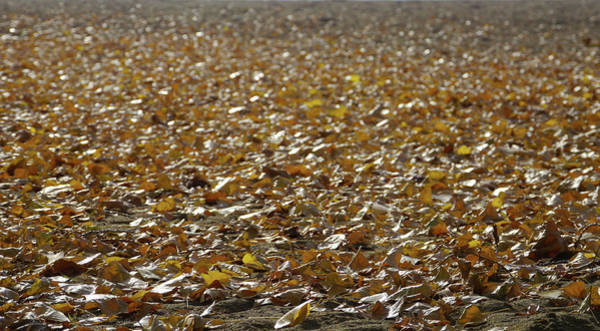 Photograph - Beach Of Autumn Leaves by Trance Blackman