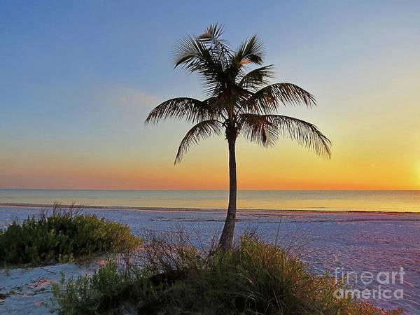 Wall Art - Photograph - Beach Palm by Chris Andruskiewicz