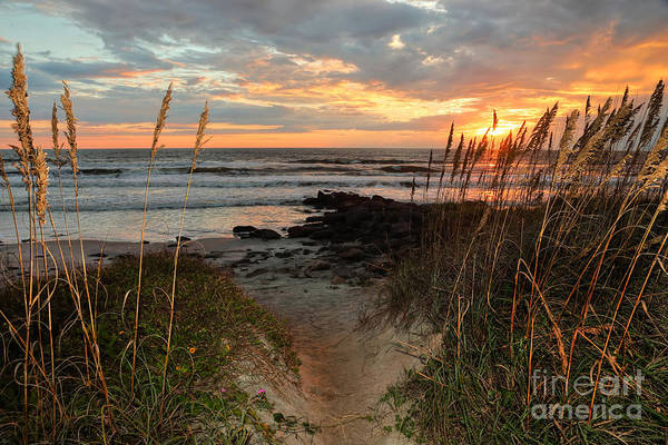 Wall Art - Photograph - Beach Path by Rick Mann