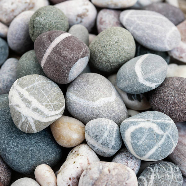 Wall Art - Photograph - Beach Pebbles Close Up by Elena Elisseeva