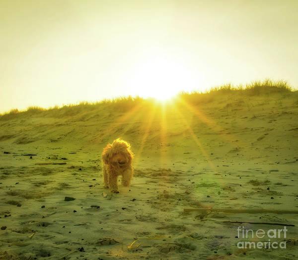 Wall Art - Photograph - Beach Puppy At Golden Sunset by DAC Photo