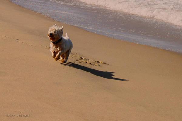 Photograph - Beach Puppy by Susan Vineyard