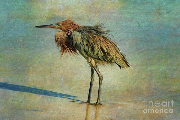 Photograph - Beach Reddish Egret by Deborah Benoit