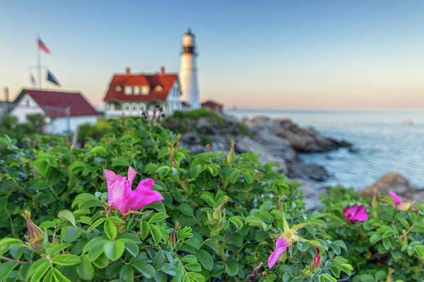 Photograph - Beach Roses At Portland Head Light by Kristen Wilkinson