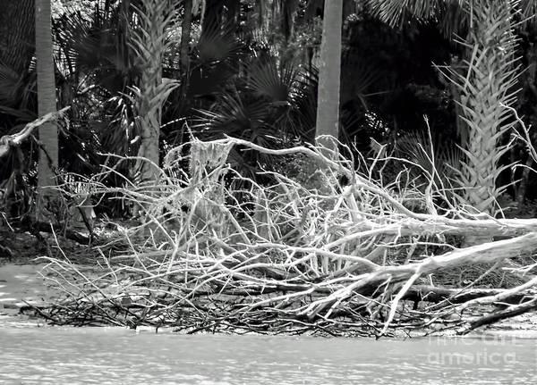 Photograph - Beach Ruins by D Hackett