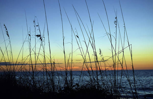 Photograph - Beach Scene by Larah McElroy