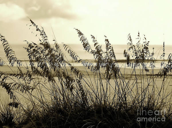 Photograph - Beach - Sepia by D Hackett