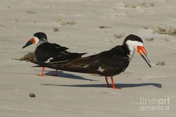 Photograph - Beach Skimmers by Deborah Benoit