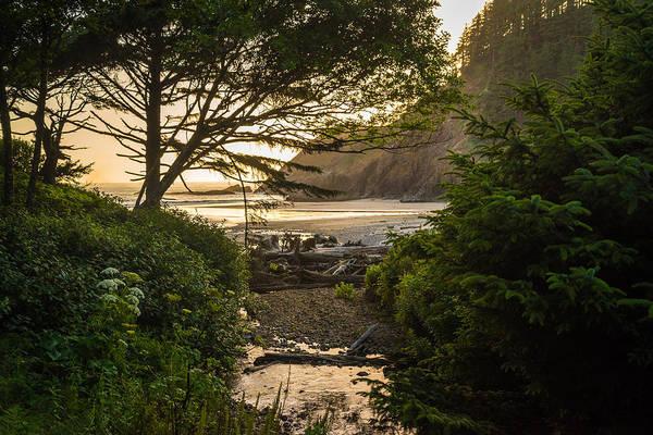 Wall Art - Photograph - Beach Trail by Kristopher Schoenleber