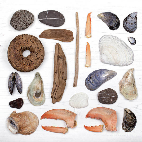 Wall Art - Photograph - Beach Treasure Flat Lay by Jane Rix