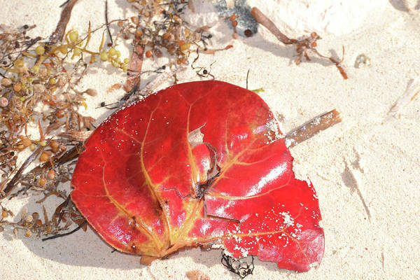 Photograph - Beach Treasures 1 by Melissa Lane