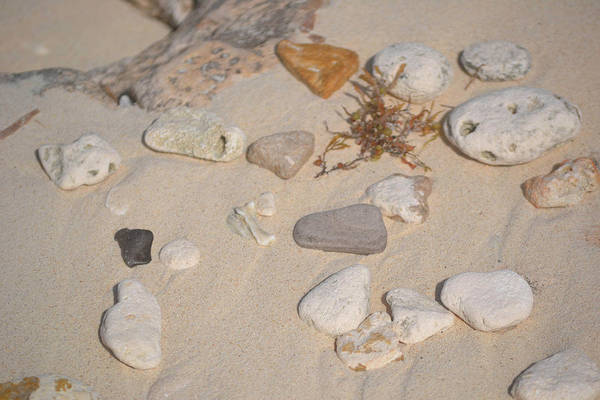 Photograph - Beach Treasures 2 by Melissa Lane