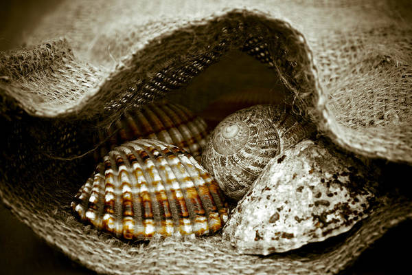 Founded Photograph - Beach Treasures by Frank Tschakert
