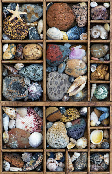 Photograph - Beach Treasures by Tim Gainey