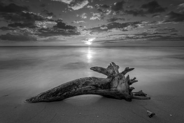 Photograph - Beach Tree Sunrise Bw by Pierre Leclerc Photography