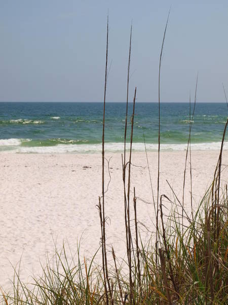 Photograph - Beach View With Grass by James Granberry