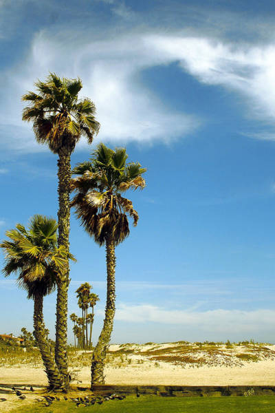 Photograph - Beach View With Palms And Birds by Ben and Raisa Gertsberg