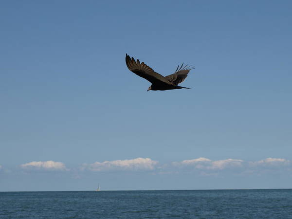 Photograph - Beach Vulture by Jeffrey Peterson