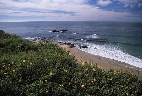 Photograph - Beach Waves And Wildflowers by Don Kreuter