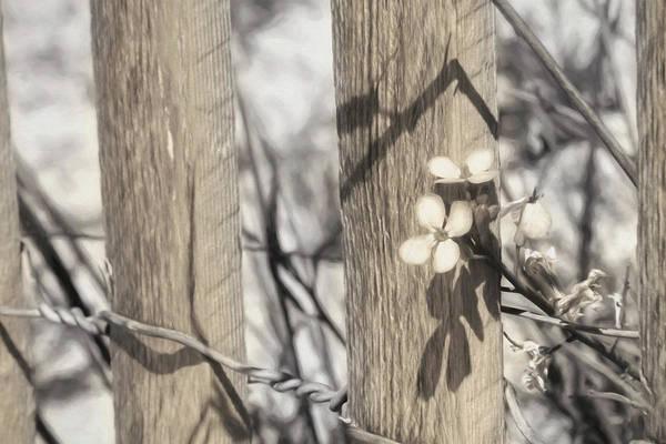 Rehoboth Beach Photograph - Beach Wildflowers by Lori Deiter
