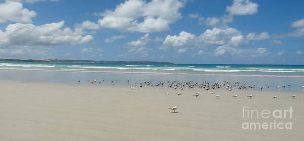 Just Birds Photograph - Beach With Seagulls by Birgit Moldenhauer