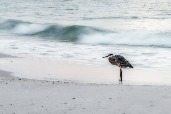 Photograph - Beachbird by Davin McLaird