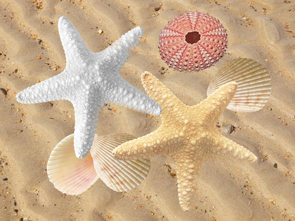 Photograph - Beachcombing by Gill Billington