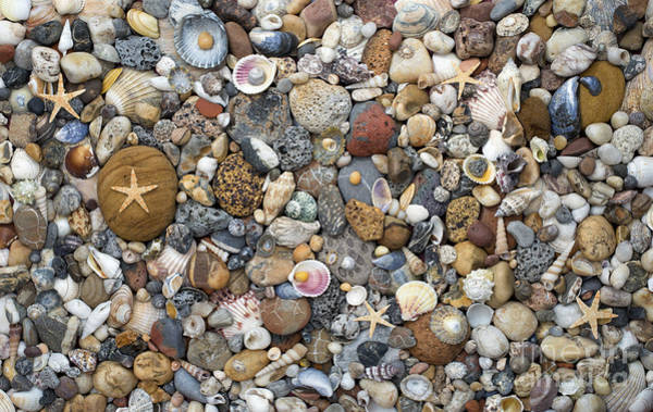 Cockle Wall Art - Photograph - Beachcombing Pattern by Tim Gainey