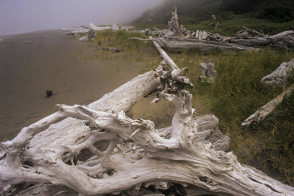 Photograph - Beached And Bleached by Robert Potts