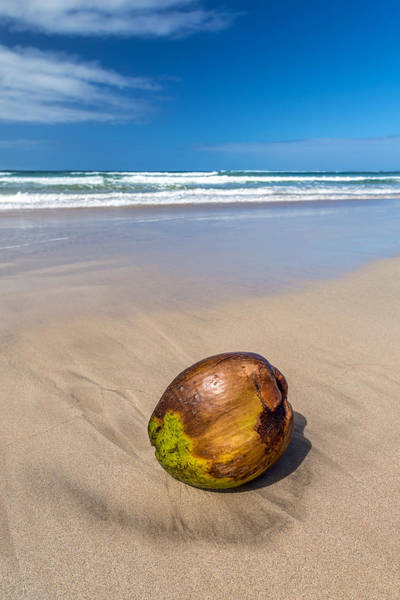 Photograph - Beached Coconut by Pierre Leclerc Photography