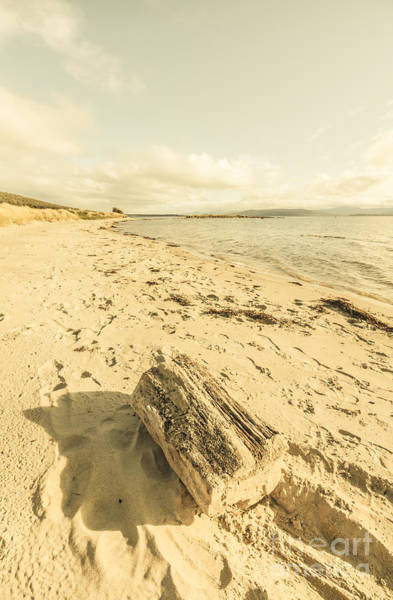 Logs Photograph - Beached Log by Jorgo Photography - Wall Art Gallery