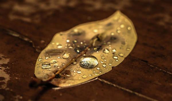 Photograph - Beads On A Leaf by Chaznik Raab