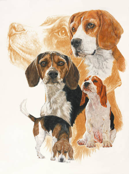 Drawing - Beagle Grouping by Barbara Keith