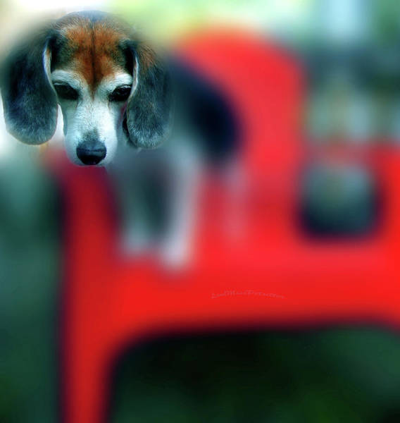 Beagle Beba Portrait Art Print