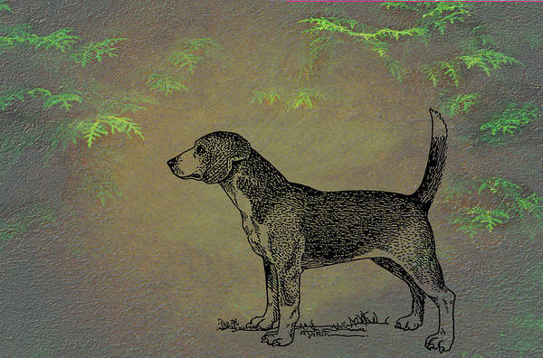 Mixed Media - Beagle by Movie Poster Prints