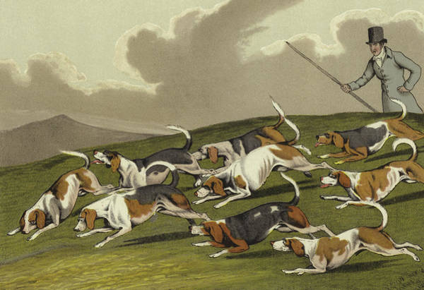 Beagle Painting - Beagles by Henry Thomas Alken