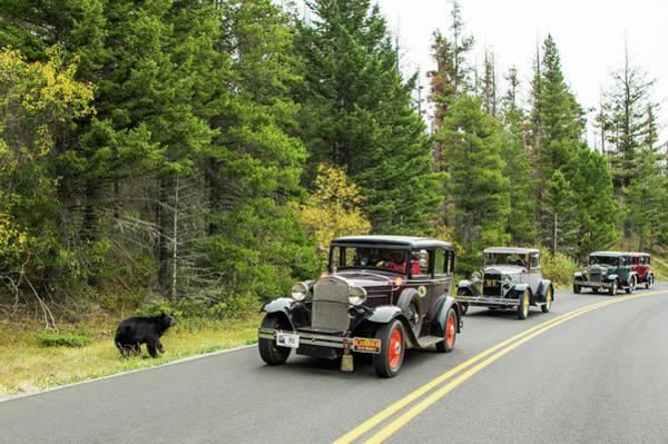Photograph - Bear And Car by Jedediah Hohf