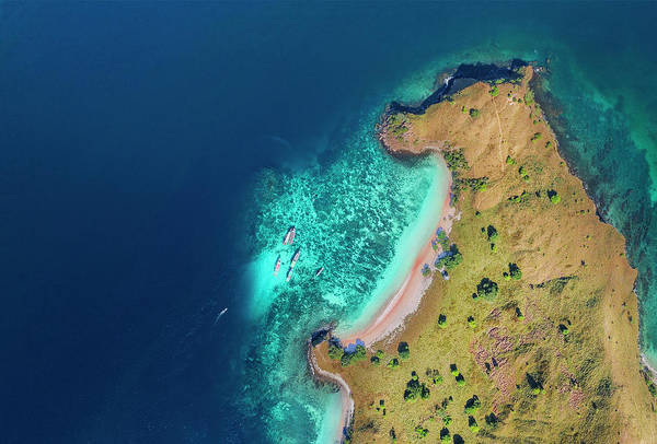 Photograph - Bear Beach Of Flores Island, Indonesia by Pradeep Raja PRINTS