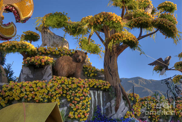 Tournament Of Roses Photograph - Bear In The Woods by David Zanzinger