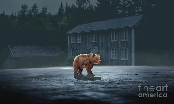 Photograph - Bear  by Sajid Ch