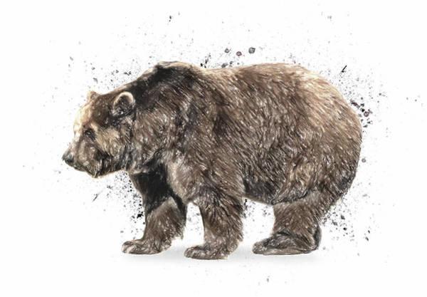 Montana Drawing - Bear Study by Zapista Zapista