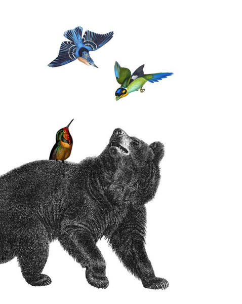 Playful Digital Art - Bear With Birds Antique Illustration by Madame Memento