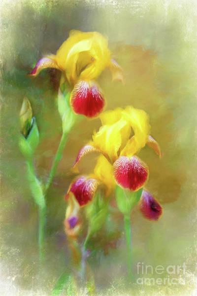 Photograph - Bearded Iris Pair by Eleanor Abramson