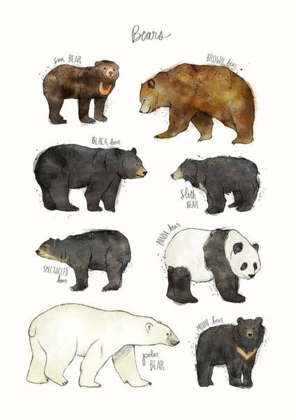 Fauna Wall Art - Drawing - Bears by Amy Hamilton