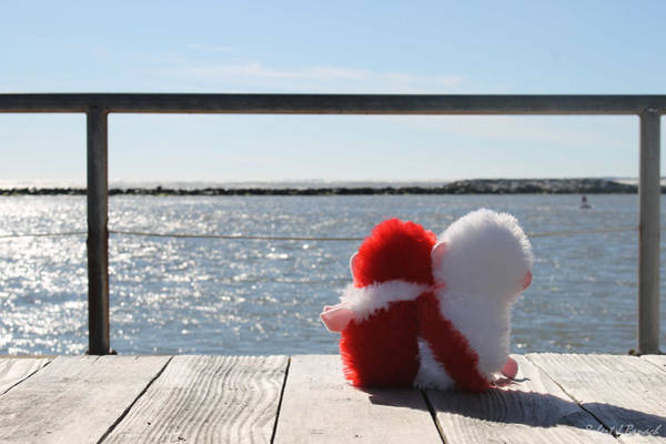 Photograph - Bears Bay Watching by Robert Banach