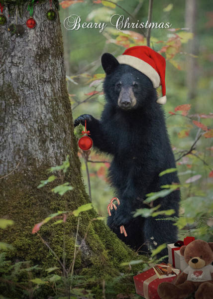 Wall Art - Photograph - Beary Christmas Card by Everet Regal