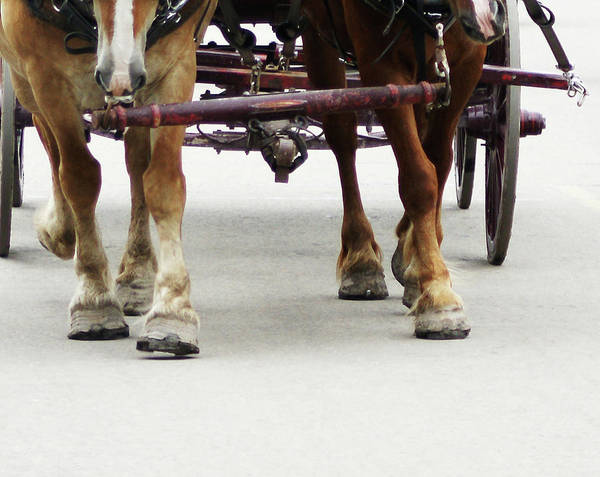 Photograph - Beast Of Burden by Linda Shafer
